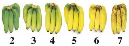 Czy można jeść banany na biegunkę: korzyści i szkody?