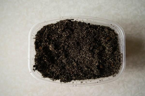 Optymalny termin sadzenia sadzonek Gaillardia