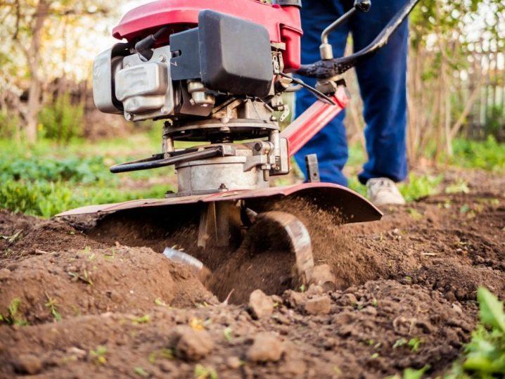 Jak sadzić ziemniaki?