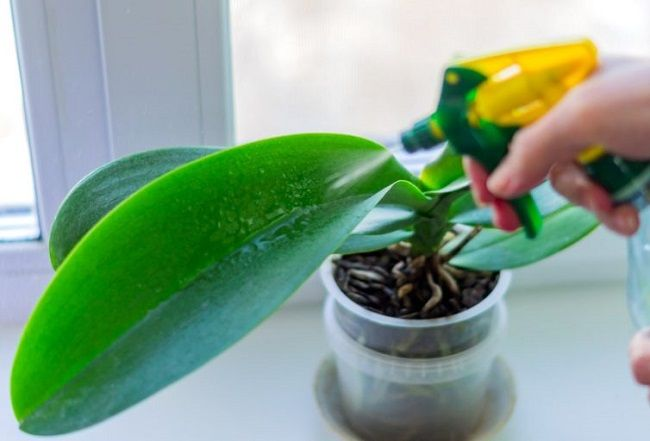 Rozpylanie orchidei